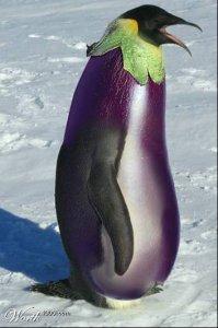 Le gouvernement indien bloque la culture de l'aubergine Bt Brinjal jusqu'à nouvel ordre